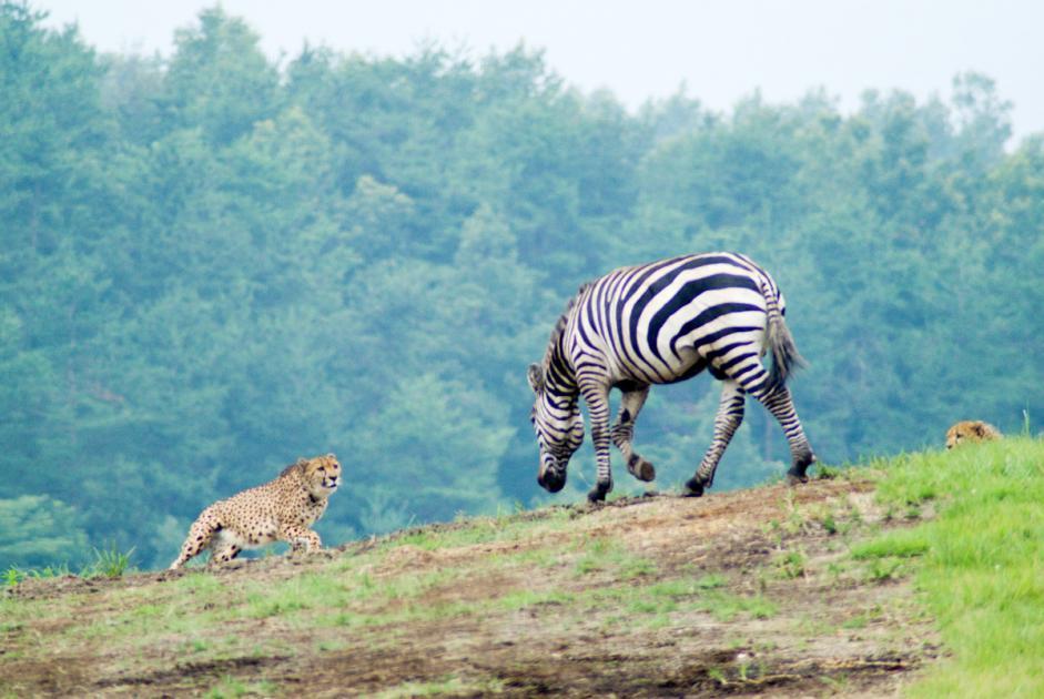 サファリ アフリカン アフリカンサファリ アフリカの国立公園・サファリ・ツアー